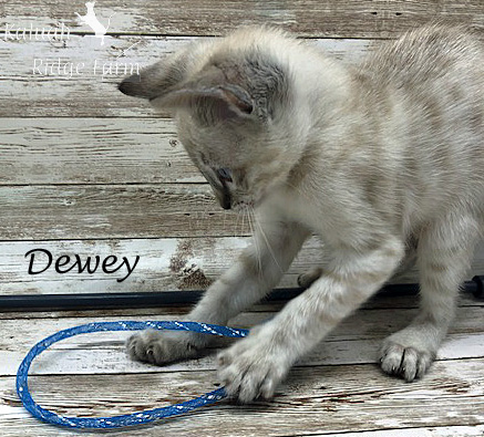 Dewey - Male Snow 8.2.2020c