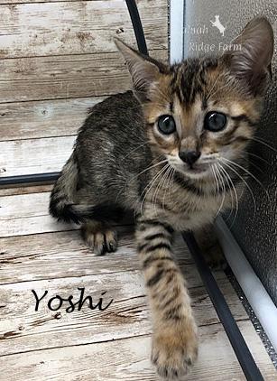 Yoshi - Female BST 8.2.2020d