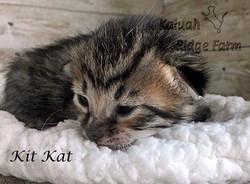 Kit Kat 3.6.21c