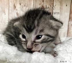 Dewdrop 5.14.21c