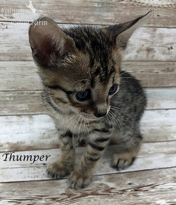 Thumper - Female BST 7.16.20a