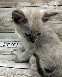 Dewey - Male Snow 7.16.20d