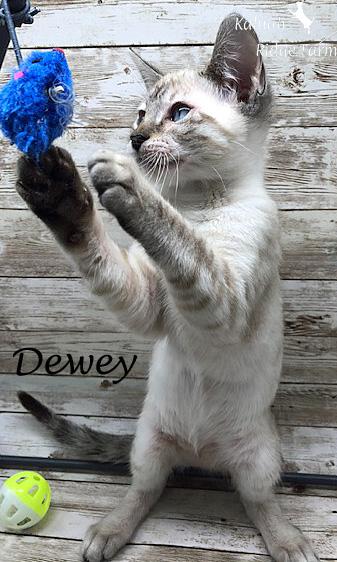 Dewey - Male Snow 8.24.20a