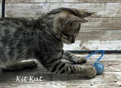 Kit Kat 4.24.21c