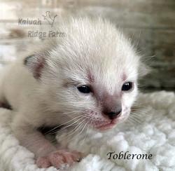 Toblerone 3.6.21b