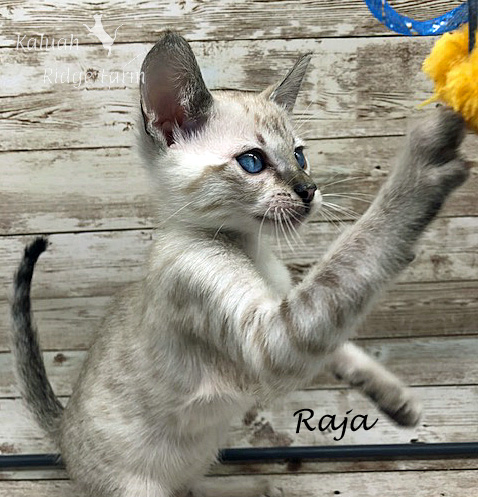 Raja - Snow Male 8.2.2020a