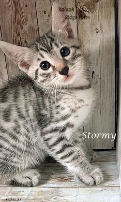 Stormy 6.20.21b