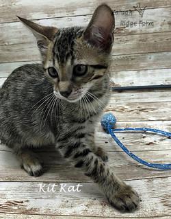 Kit Kat 4.24.21d
