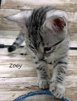 Zoey 12.2020e