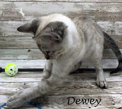 Dewey - Male Snow 8.24.20d