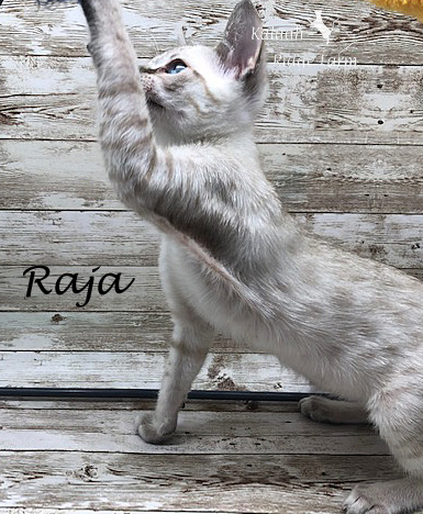 Raja - Snow Male 8.24.20c