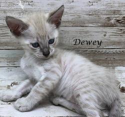Dewey Male Snow 7.16.20a