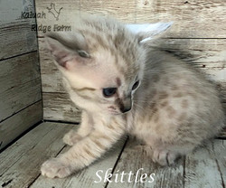 Skittles 3.28.21c