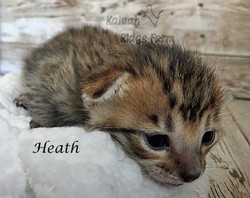Heath 3.6.21d