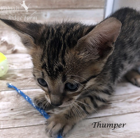 Thumper - Female BST 7.16.20b