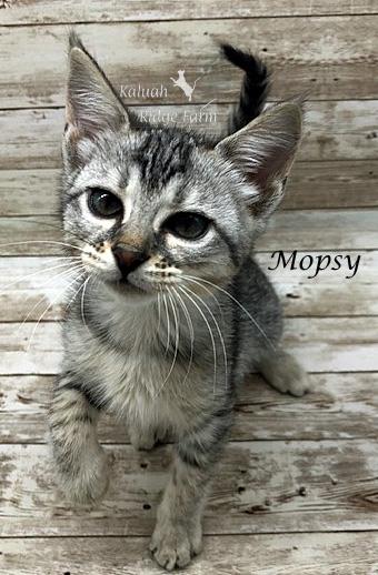 Mopsy - Female Silver 6.20.20a