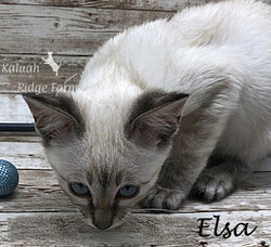 Elsa - Female Snow 8.24.20d