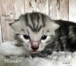 Thunder 5.14.21a