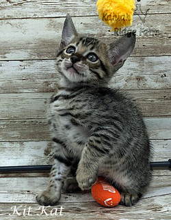 Kit Kat 4.11.21a