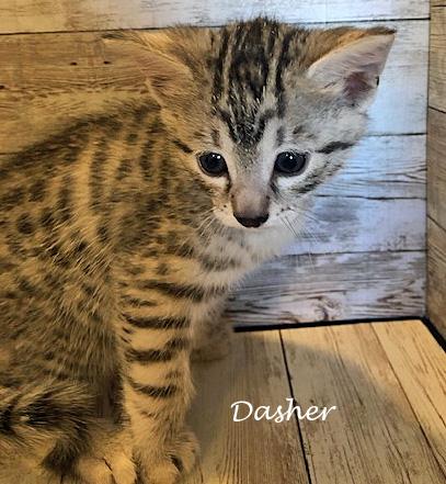 Dasher 11.27.20d
