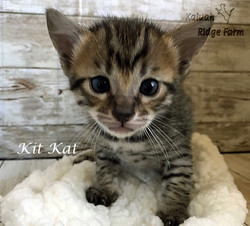 Kit Kat 3.20.21c