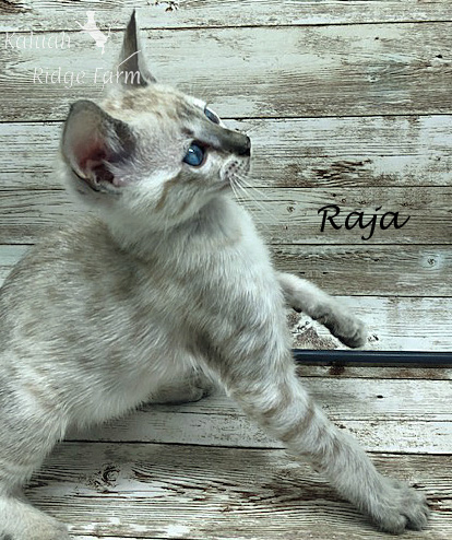 Raja - Snow Male 8.2.2020d