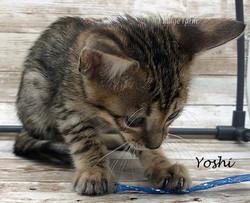 Yoshi - Female BST 8.2.2020a