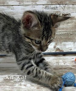 Kit Kat 4.11.21b