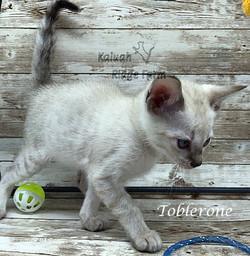 Toblerone 4.11.21c