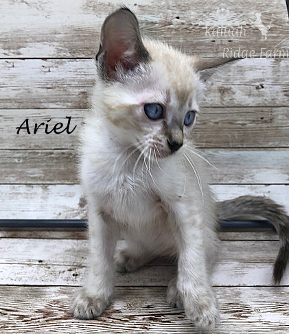 Ariel - Female Snow 8.2.2020b