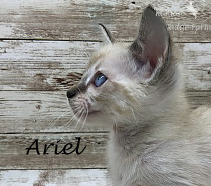 Ariel - Female Snow 8.2.2020e