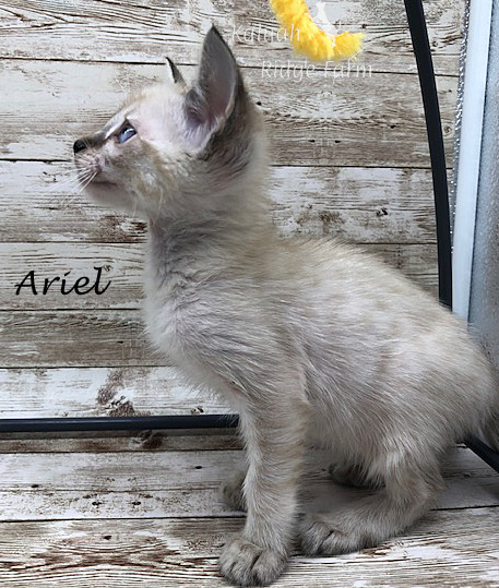Ariel - Female Snow 8.2.2020d