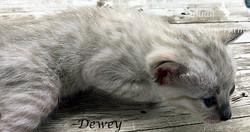 Dewey - Male Snow 7.2.20a