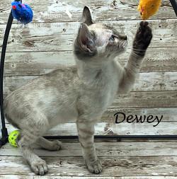 Dewey - Male Snow 8.24.20b
