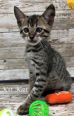 Kit Kat 4.11.21c