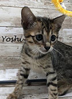 Yoshi - Female BST 8.2.2020c