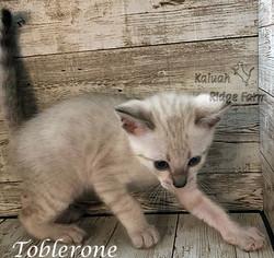 Toblerone 3.28.21b