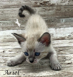 Ariel - Female Snow 7.16.20d