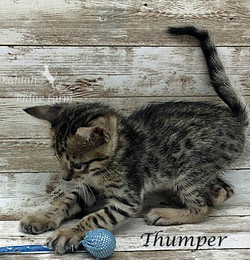 Thumper - Female BST 7.16.20d