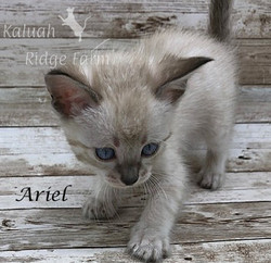 Ariel - Female Snow 7.16.20c