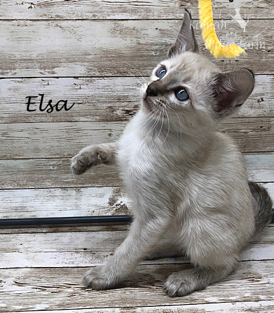 Elsa - Female Snow 8.2.2020c