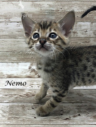 Nemo - Male BST 7.16.20b