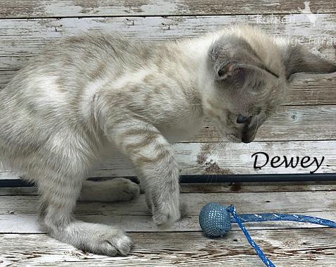 Dewey - Male Snow 8.2.2020e