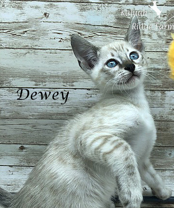 Dewey - Male Snow 8.2.2020b