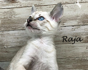 Raja - Snow Male 8.2.2020e