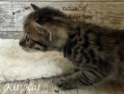 Kit Kat 3.20.21b