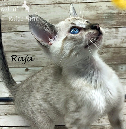 Raja - Snow Male 8.2.2020c