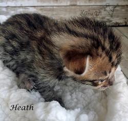 Heath 3.6.21b
