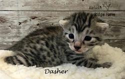 Dasher 11.7.20b