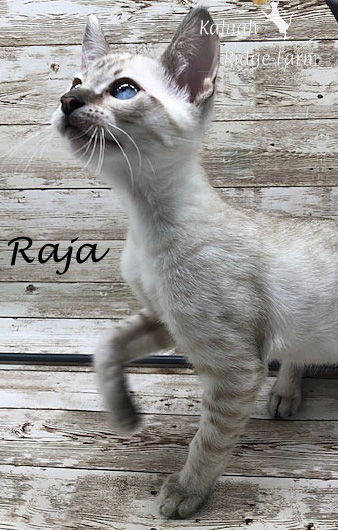 Raja - Snow Male 8.24.20b